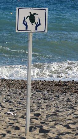 Aquila Rithymna Beach Hotel : Protection des tortues Caretta