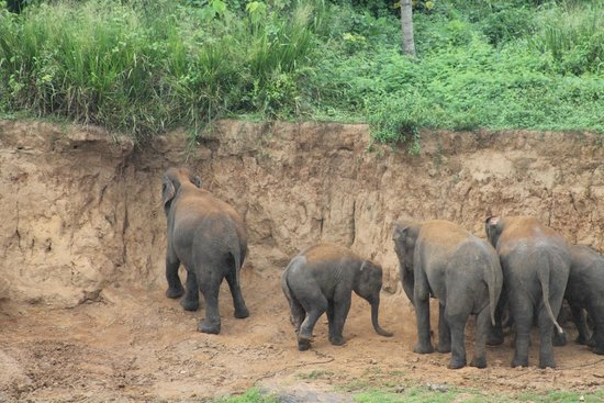 Pinnawala Elephant Orphanage: Playing in the dirt