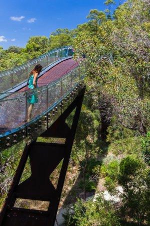 Kings Park & Botanic Garden: bridge in the park