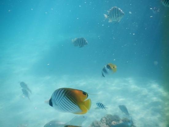 Conrad Bora Bora Nui : snorkeling right off of our bungalow