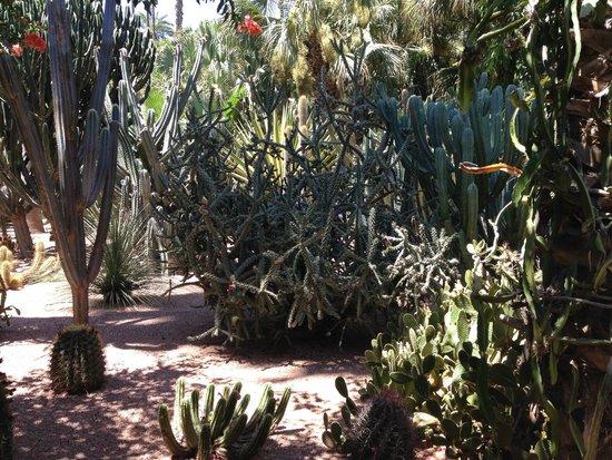 Jardin Majorelle : Сад Мажореля