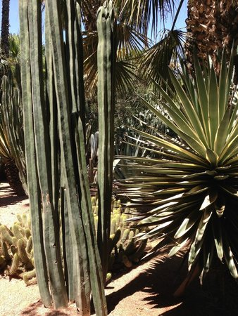 Jardin Majorelle : Потрясающие кактусы