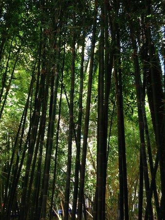 Jardin Majorelle: Бамбук