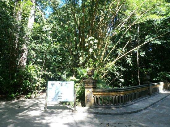 Bosque Rodrigues Alves - Jardim Botanico da Amazonia : floresta