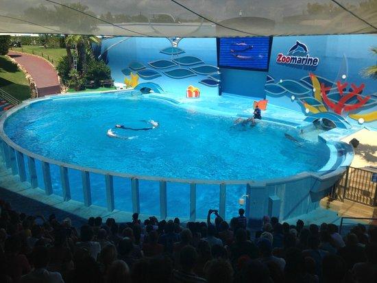 Zoomarine Algarve : Шоу дельфинов