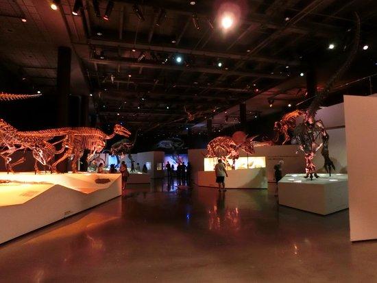 Imax Houston Museum Natural History