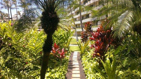 Sheraton Maui Resort & Spa: Grounds