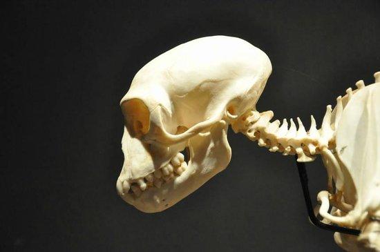National Museum of Natural History: Skeleton display