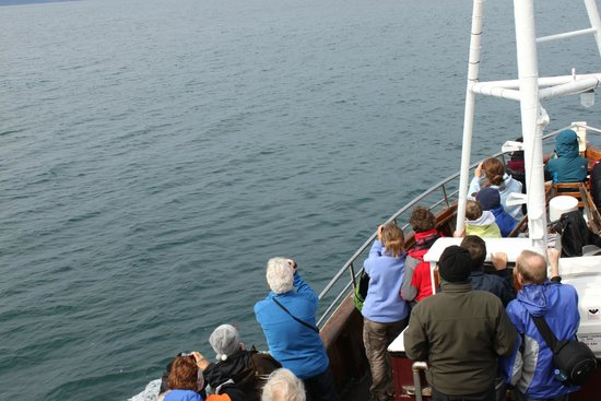 Gentle Giants Whale Watching: Barco, el frío era indescriptible, pero prestan monos