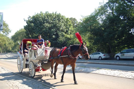 Central Park: Horse and buggy ride