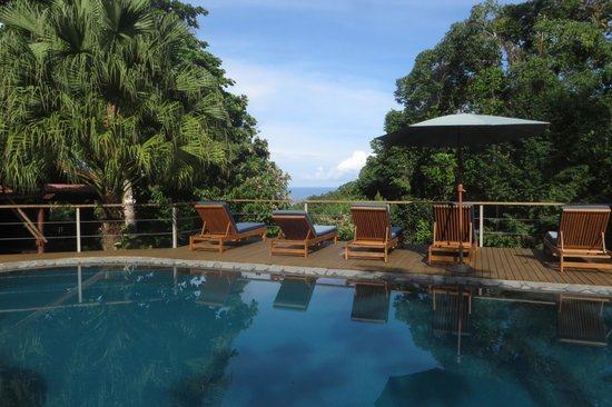 El Remanso Lodge : Pool & deck with jungle/ocean view