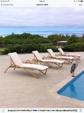 Finch Bay Galapagos Hotel: Enjoy a swim with the wildlife