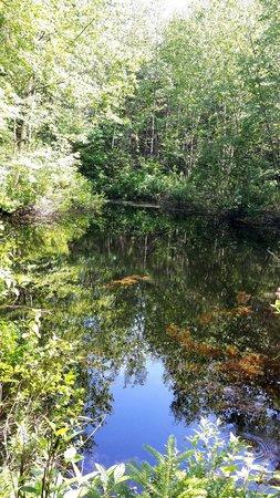 Acadia Cottages: Pond behind Cabin 4.