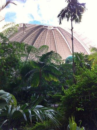 Tropical Islands Resort: Floresta tropical