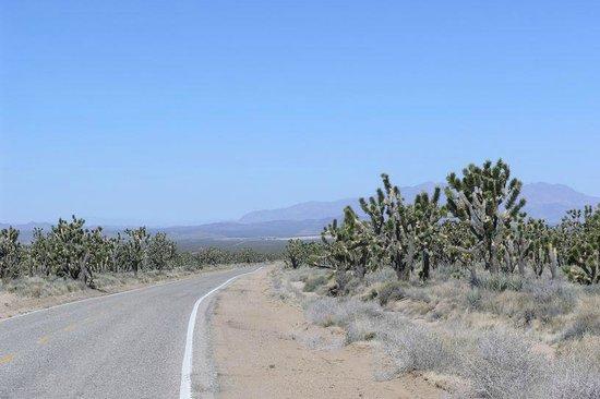 Mojave National Preserve: Roadway through Mojave Preserve