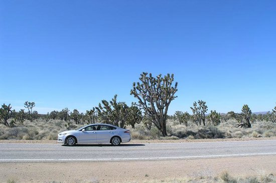 Mojave National Preserve: Roadside Joshua trees
