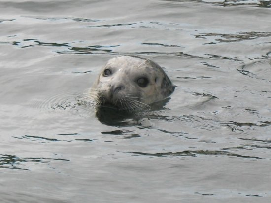 VIP Fishing Charter : Friendly neighborhood Seal