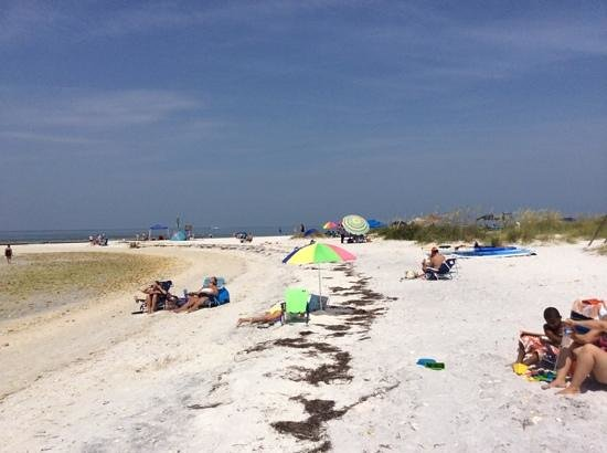 Honeymoon Island State Park : nice beach