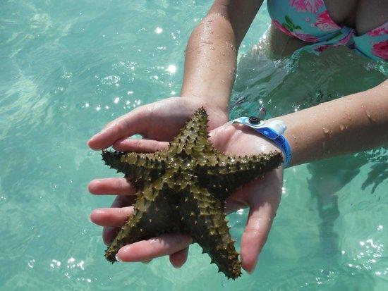 Hotel Playa Cayo Santa Maria: Starfish