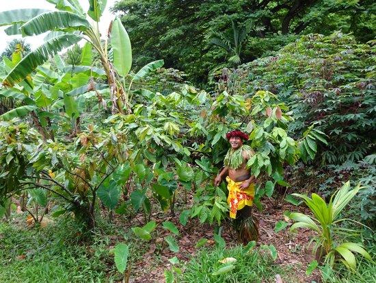 Tropical Farms Macadamia Nut Farm and Farm Tour: guide