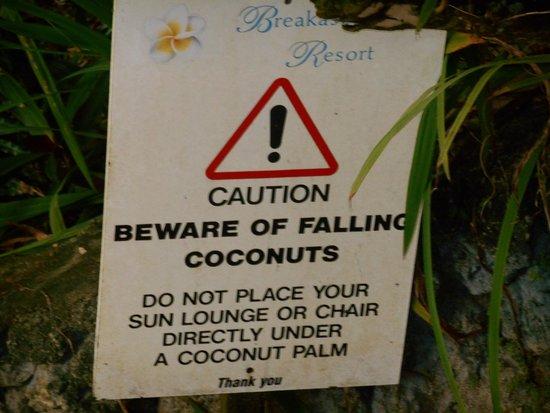 Breakas Beach Resort Vanuatu: Coconuts