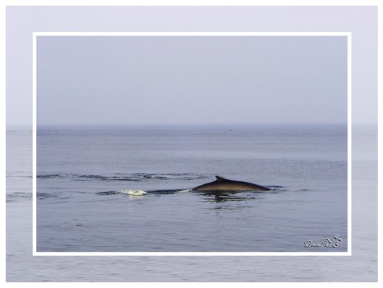 Condos-Hôtels Natakam et Chalets : Sur le bord du fleuve baleine