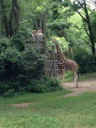 Bronx Zoo : feeding time