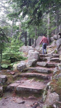 Asticou Terraces / Thuya Garden: Steps up to Thuya.