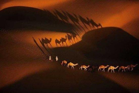 Sahara Desert Crew: Camel's shadows