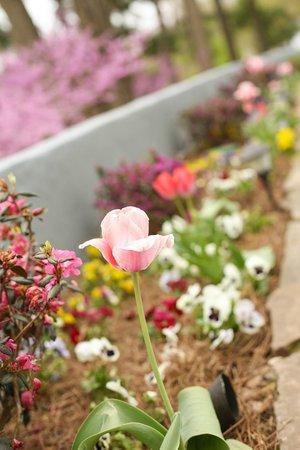 Biltmore Village Inn : Spring blooms