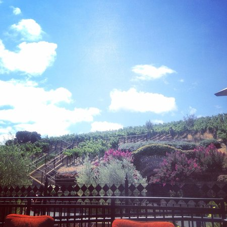 The Meritage Resort and Spa: Tasting cellar and spa