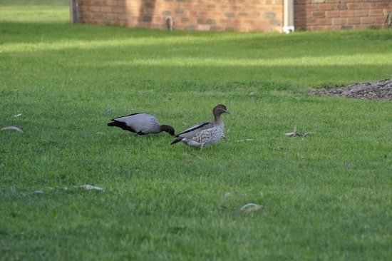 Cadell on the Murray: birds