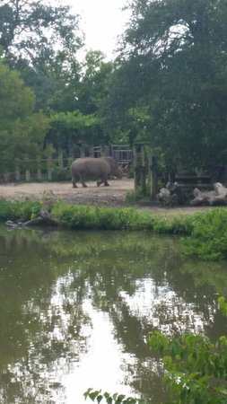 Audubon Zoo : Rhino at the zoo