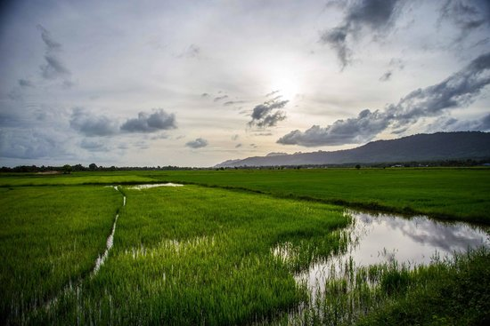 Dev's Adventure Tours: Beautiful rice paddies while on Cycling tour
