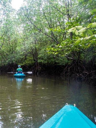 Dev's Adventure Tours: Through the Mangrove with Khirien
