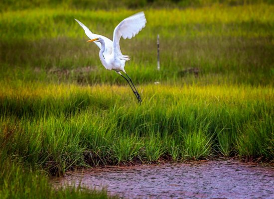 Parker River National Wildlife Refuge: Bird at the wildlife