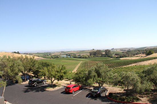 Artesa Vineyards & Winery : Panoramic views from the gallery