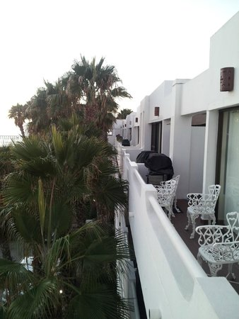 La Paloma: A view of the stupid palm trees blocking the beautiful ocean view