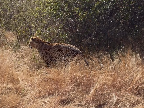 Sabie River Bush Lodge: Our final in the big 5