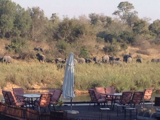 Sabie River Bush Lodge : The elephants that came to the lodge