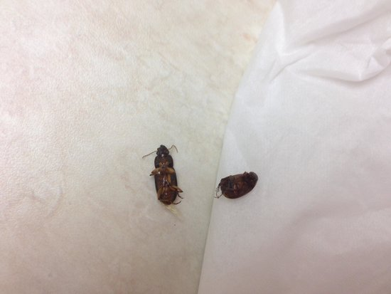 Americas Best Value Inn : Only a couple of the beetles