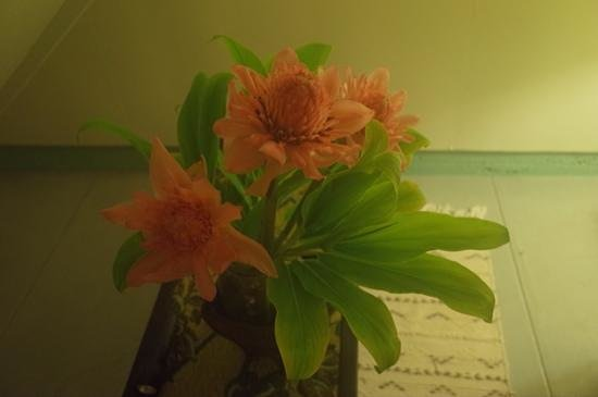 Akiko's Buddhist Bed and Breakfast: flowers