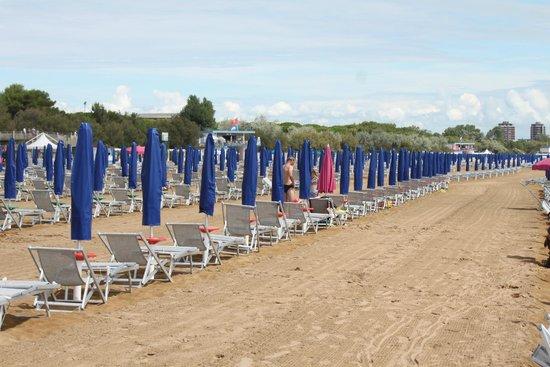 Camping Village Pino Mare : Beach