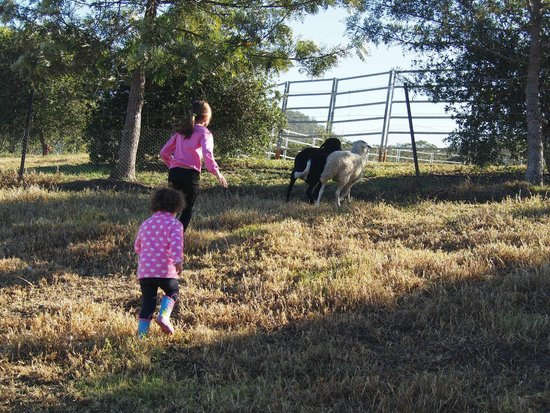 Lillydale Farmstay: Chasing the sheep