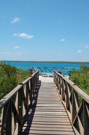 Villa Las Brujas: Pontile tra le mangrovie