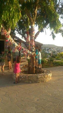 Tsokkos Beach Hotel: Дерево желаний на территории церкви