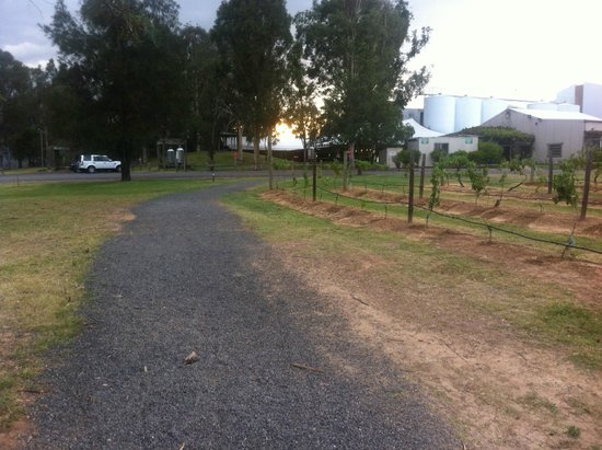 Hunter Valley Resort: walking to the food/drink area from room