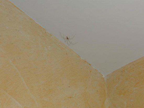 Manoir des Douets Fleuris : Araignée