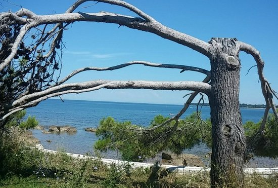 Melia Coral: Dintorni