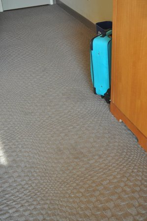 Sheraton Myrtle Beach Convention Center Hotel: Dirty carpets